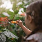 Franklin Park Conservatory Butterfly