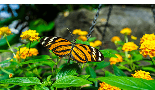 Franklin Park Conservatory and Botanical Gardens Columbus Ohio