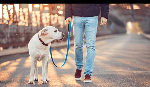 Evening Sunset Man Walking Dog