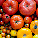 Close up of different types, sizes and colors of tomatoes