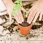 Person putting a plant in dirt in a ceramic pot