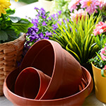 Gardening - Choose your Planting Pots