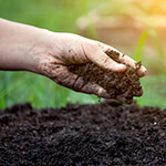 Gardening - Choose your Soil