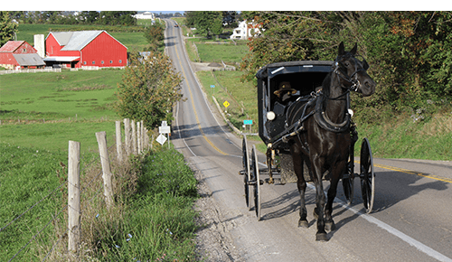 Amish buggy vehicle being pulled by a black horse on a country roadway