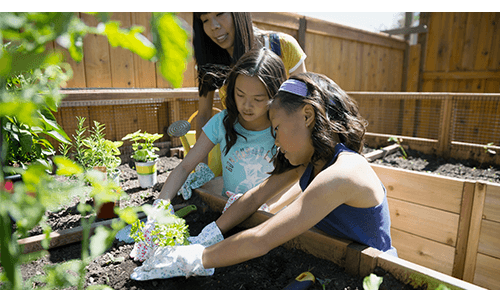 Family Planting Garden Together
