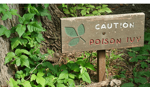 Caution sign in area of poison ivy