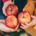 Closeup of hands holding three red apples