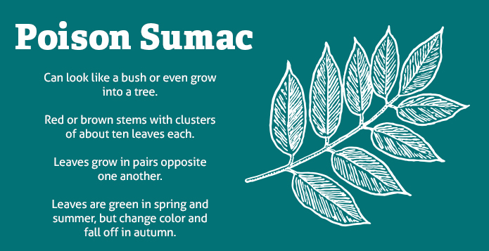 Poisonous Plants Poison Sumac