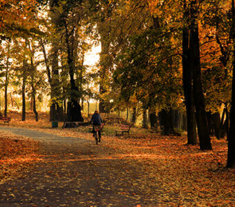Forest bike path in the fall with lone bike rider in distance