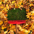Rake in pile of fallen leaves on lawn