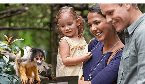 Family with small child looking at an animal at the zoo