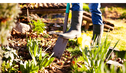 Person pushing spade into garden